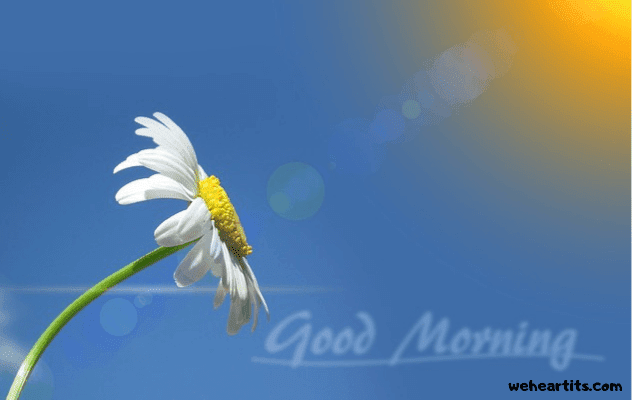 good morning images 3d