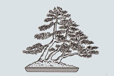 http://evoluzionebonsai.blogspot.it/2015/02/stili-bonsai-ne-tsuranari-tronchi.html
