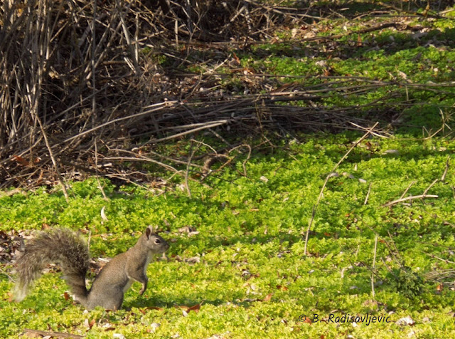 """Larry"" Moore Park in Paso Robles: A Photographic Review - Squirrel"