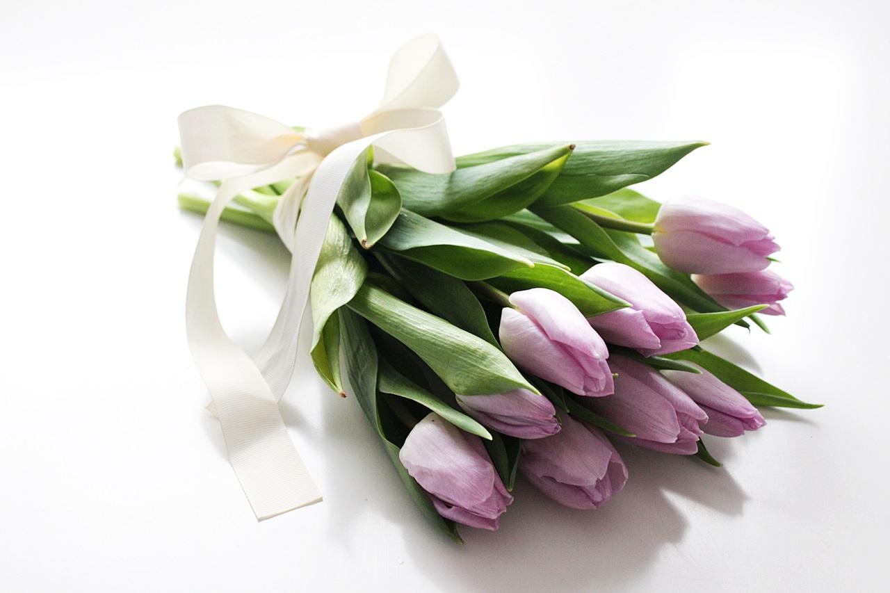 tulips tulppaanit
