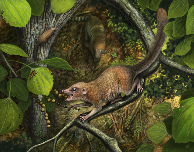 New fossil discovery illuminates the lives of the earliest primates