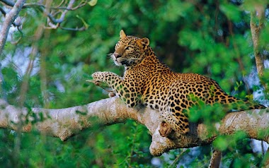 Full day safari tour at udawalawe national park