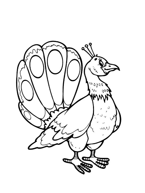 Mewarnai Gambar Burung Merak - 5