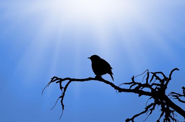 Moral story in Hindi-नादान चिड़िया