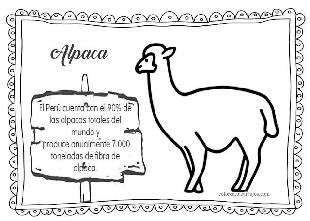Colorear dibujos de alpaca