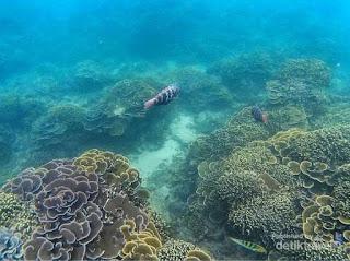 akcayatour, Pantai Kletekan, Travel Jogja Malang, Travel Malang Jogja