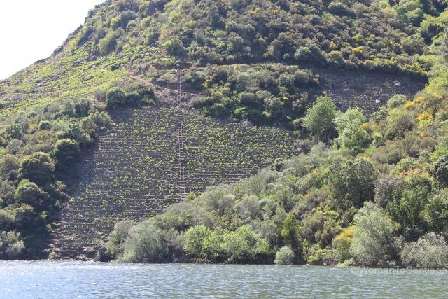 ribeira-sacra-camino-de-santiago-de-invierno-terrazas-rio-sil