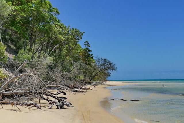 wild Strand fahren Bäume Holz Totholz Strandstrasse Strasse Strecke Natur Moreton Island