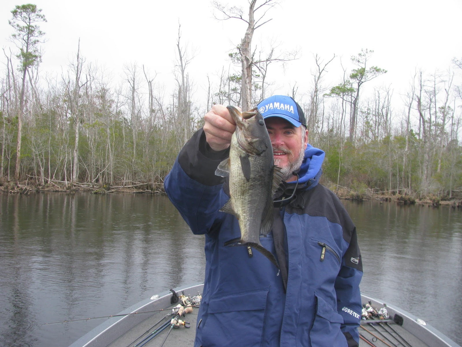 Backwateradventures outer banks bass fishing for Bass fishing websites