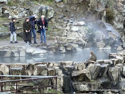 hot spring at Jigokudani Yaen-Koen Snow Monkey Park in Nagano, Japan