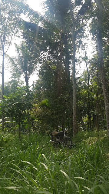 Old motorbike around the green grass