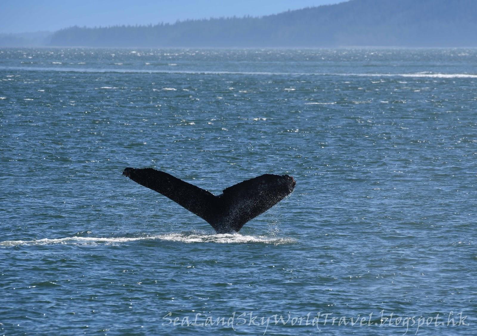 朱諾, Juneau Whale watching, 觀鯨團