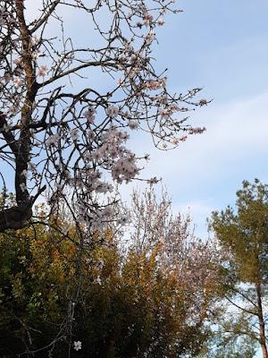 Detalle de flores en los alrededores de Barxeta