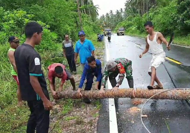 Babinsa Saprizal Membantu Evakuasi Pohon Kelapa Yang Tumbang Menimpa Kabel di Jalan Raya
