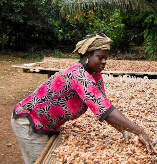 Drying cocoa beans in the sun in Ghana