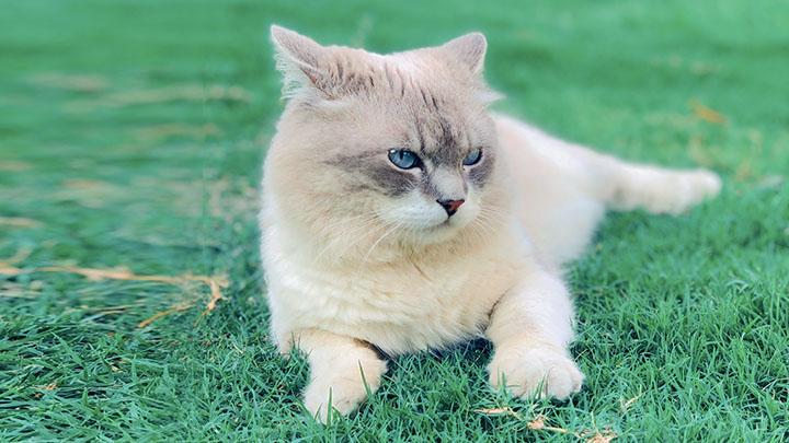 how-do-you-discipline-a-cat
