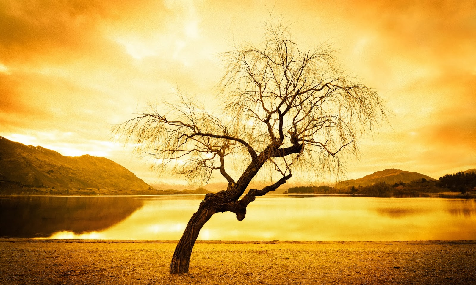tree hd wallpapers - photo #9