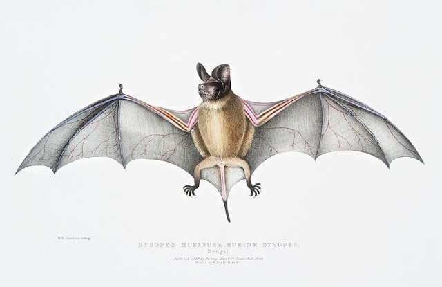 Today is International Bat Nights Day - What's Special Today