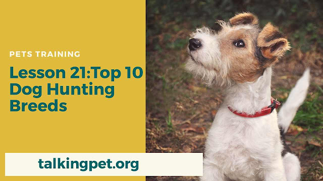 Top 10 Hunting Dog Breeds in 2020 For You