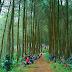 Pesona Hutan Pinus Karacak Valley Garut