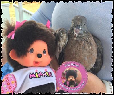 Diana la Monchhichi et Colombine le bébé pigeon - pigeonneau - oisillon - oiseau