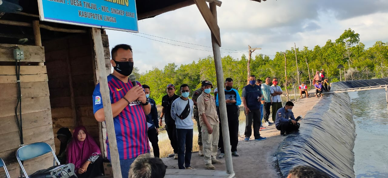 Plt Bupati Lingga Memanen Udang di Dua Tambak Pembudidaya Udang Vaname Didua Desa
