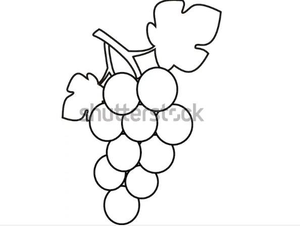 draw illustration grape