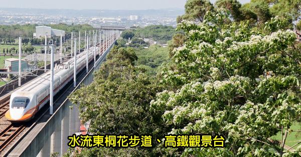 台中外埔|水流東桐花步道|高鐵觀景台|賞桐花近距離觀賞高鐵呼嘯而過
