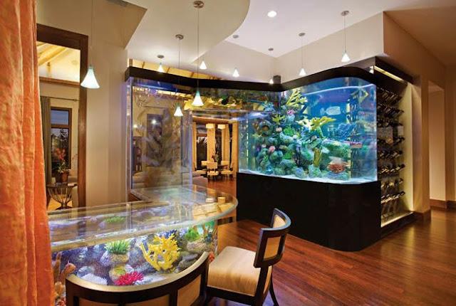 Ketahui-Ikan-Hias-Aquarium-Yang-Cocok-Untuk-Rumah-Anda