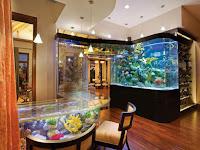 Ketahui Ikan Hias Aquarium Yang Cocok Untuk Rumah Anda