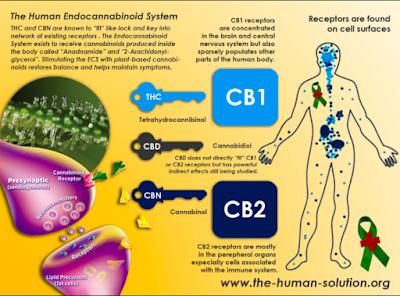 Huile de CBD et fibromyalgie | Natura CBD