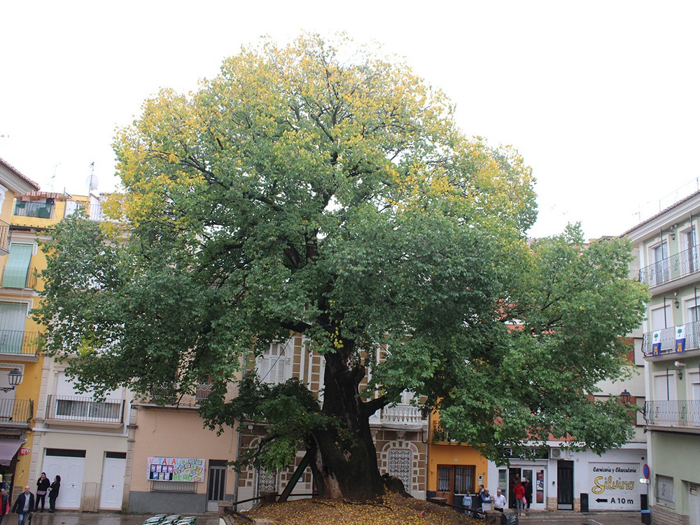 european-tree-of-the-year-15