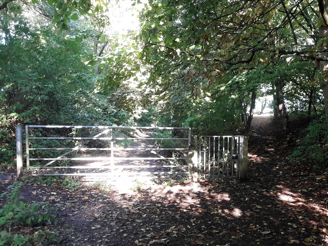 A woodland path, framed by trees.  The sun is shining and there are shadows on the ground.  In the centre of the picture is a large metal gate.