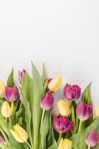 صور زهور ورق حائط 22
