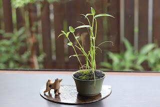 草色の鉢に入ったクグとツユクサの山野草盆栽と犬の置物