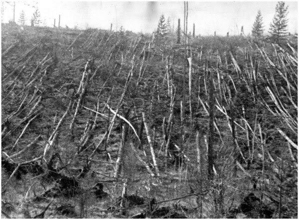 Ultimate Collection Of Rare Historical Photos. A Big Piece Of History (200 Pictures) - The Tunguska Meteor Impact