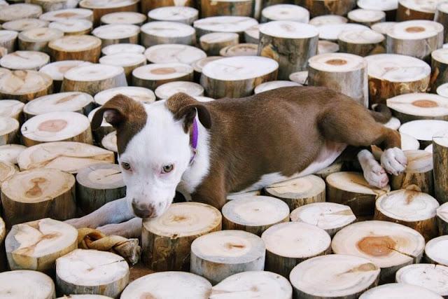 Puppy DNA testing