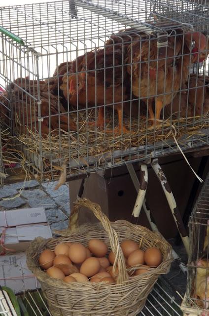 ovos na Feira de Espinho