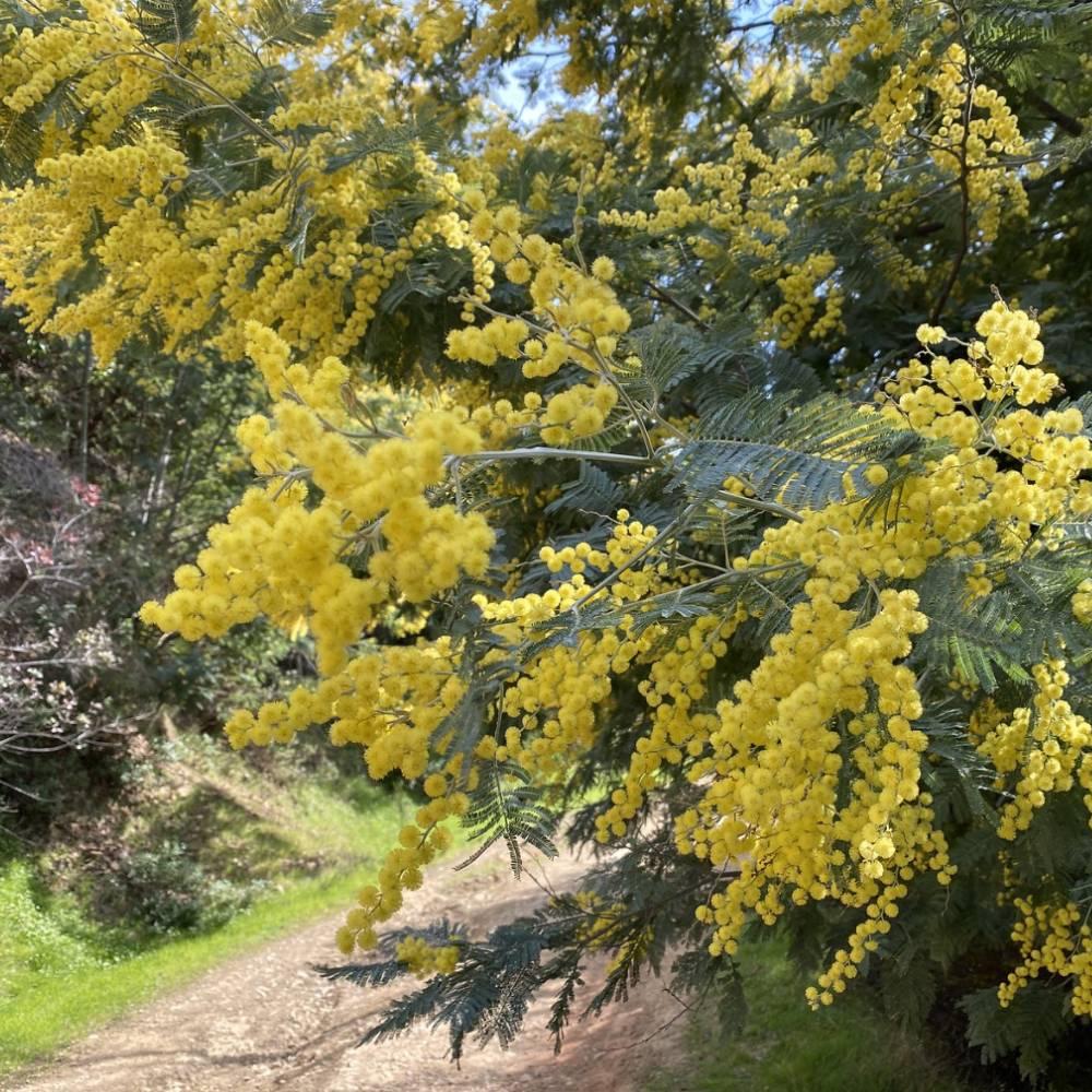 ambiente de leitura carlos romero cronica jose nunes nostalgia ipe amarelo roxo acacias joao pessoa paraiba lagoa parque solon lucena arvores