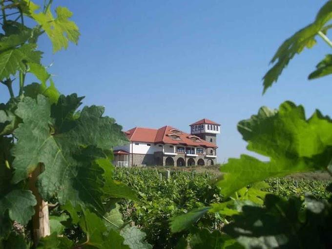 Drei Weingüter die Ihr in der Weinregion Povardarie in Mazedonien besuchen müsst