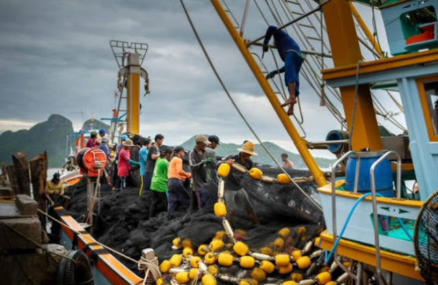 Di Kapal China, ABK Indonesia Dikasih Makan Umpan Ikan Bau dan Daging 13 Bulan dari Freezer