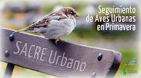 http://juanpuchefernandez.blogspot.com/2016/04/estudios-de-aves-urbanas-sacre-urbano.html