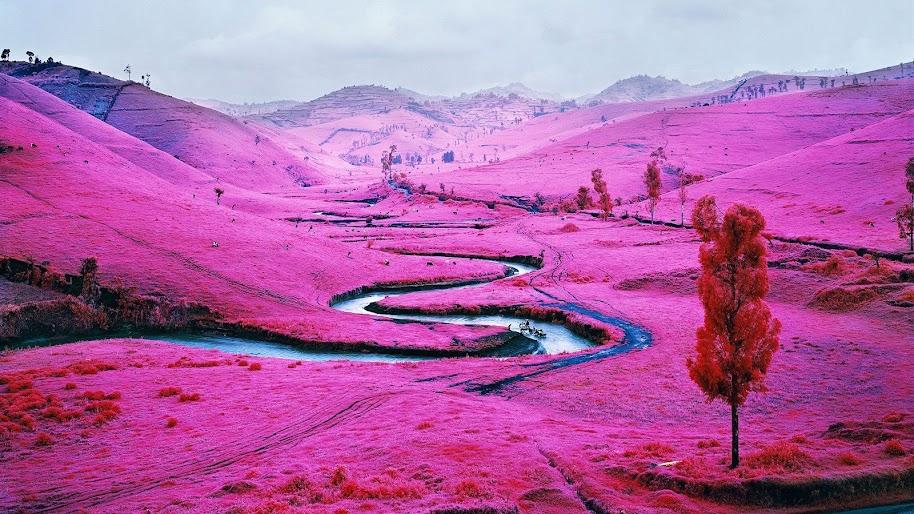 Pink Field, Nature, Scenery, Landscape, 4K, #181