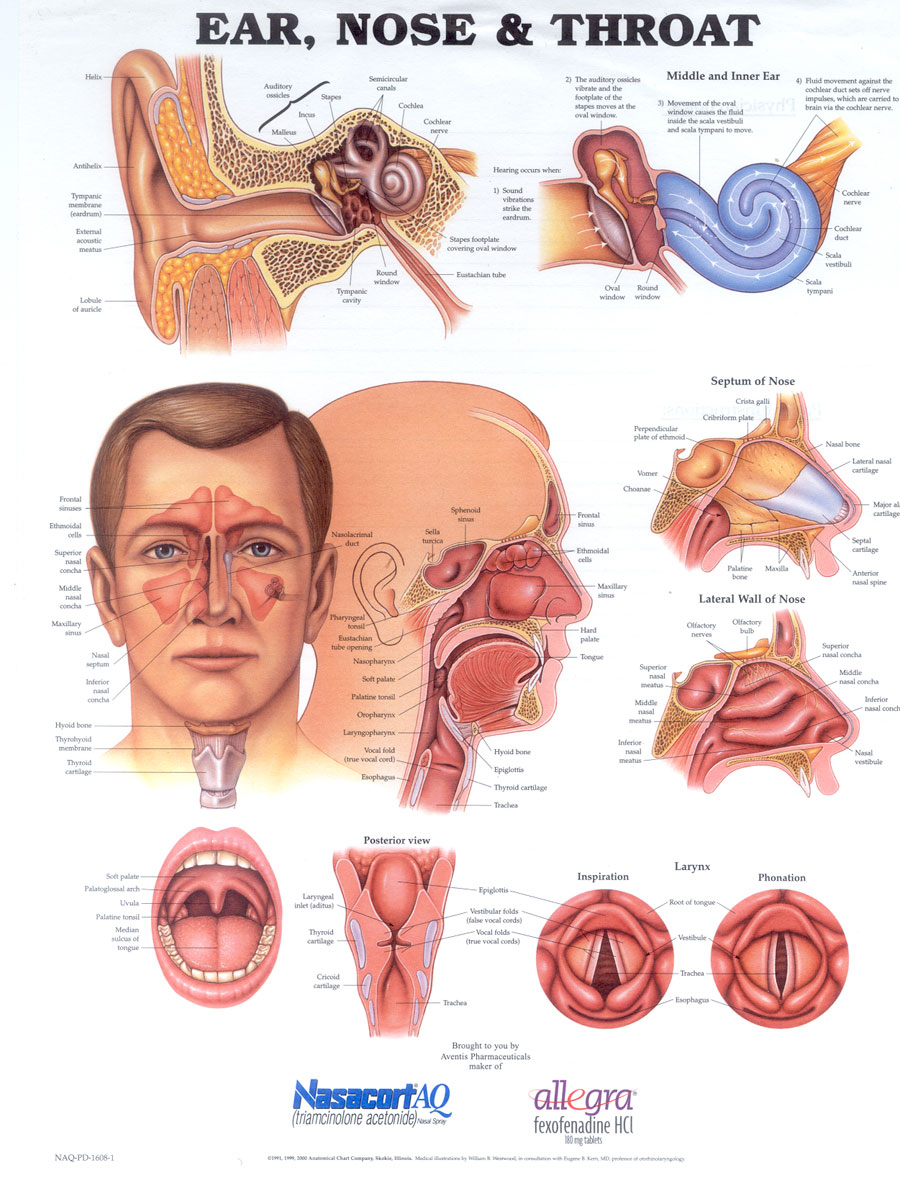 my medical transformation acid reflux