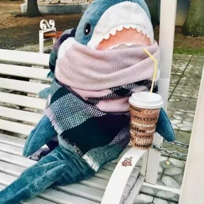 Акула с кофе на скамье в парке