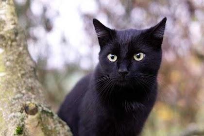 حقائق مخيفة و مرعبة عن القطط ! الجزء الثالث
