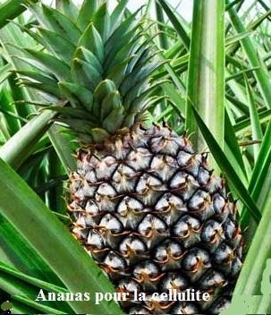 Cellulite et rem des naturels rem de naturel par les plantes - Moucheron plante remede naturel ...