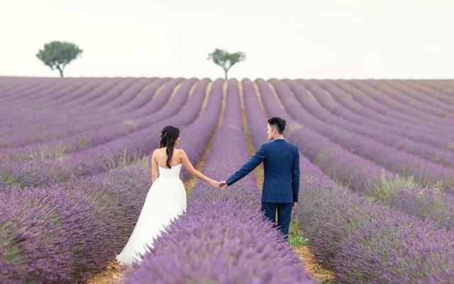 Ý Nghĩa Của Hoa Oải Hương (Lavender) Là Gì? - Ảnh 5