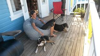 Haussitten mit Hunden