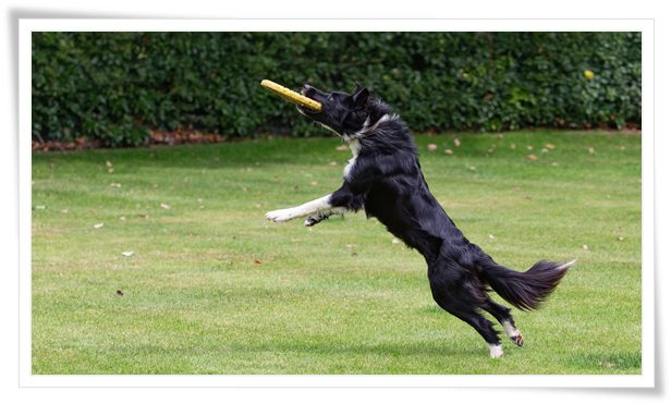 dog training near me